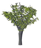 dwg درختان و گیاهان Autocad 3D